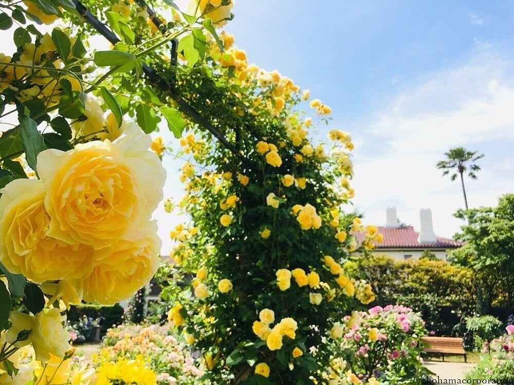 今の時期はバラがたくさん。とても綺麗でした!