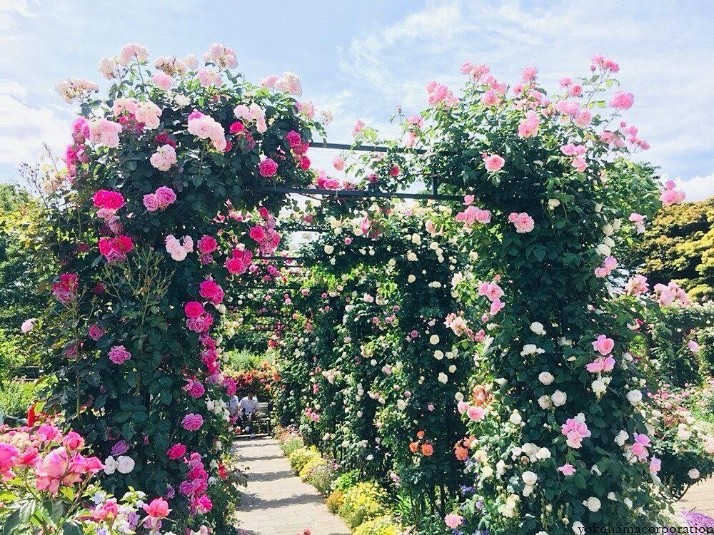 ここは山下公園^^ お天気も良くてお花も元気!